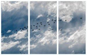 Cuadro tríptico cielo 3 - Proyecto cuadro